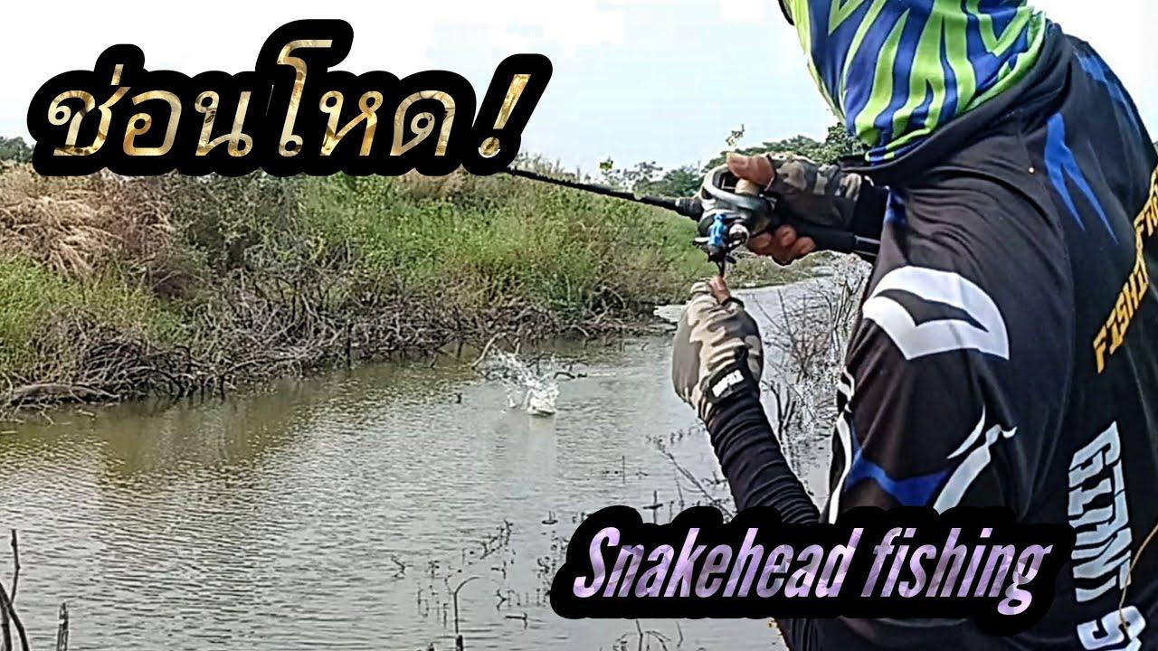 ตกปลาช่อน กัดโดด!ตัวลอยเลยsnakehead fishing