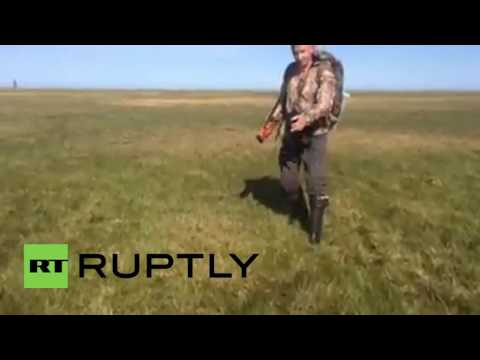 Russia: It moves! Grass bizarrely bubbles in Siberia