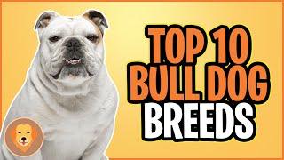 TOP 10 BULL DOG BREEDS