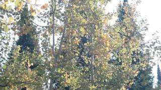Оркестр Поля Мориа музыка Эннио Морриконе из к/ф Профессионал (осень 2014 у деревни Зимовьё)