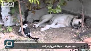 مصر العربية | عجائب الحيوانات .. كلبة تحتضن وترضع قطط