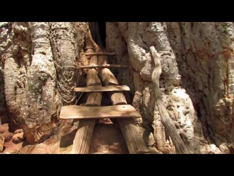 South Africa: Inside a Gaint Baobab - Gravelotte