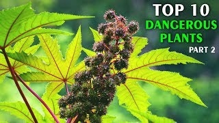 Top 10 Most Dangerous Plants In The World Part 2 | Vlog#29 by HooplakidzLab