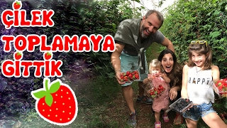 We Went Strawberry Picking But Starved | Our Family