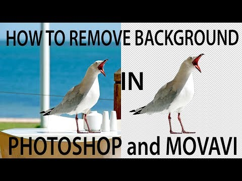 How to remove background in PHOTOSHOP and MOVAVI - compare 2 editors