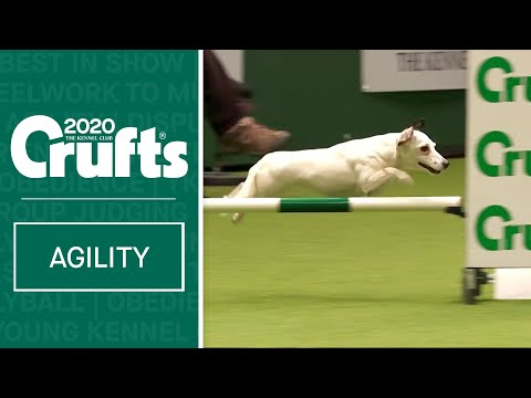 Agility - Championship Round 2 - Small (Agility) | Crufts 2020