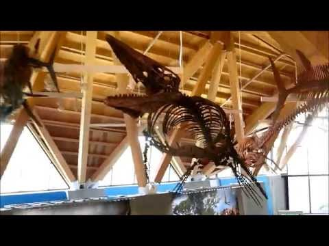 Philip J Currie Dinosaur Museum part 2