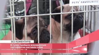 В Сумах пройшла всеукраїнська сертифікатна виставка собак