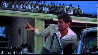 The Birds Final Scene