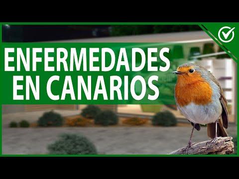 🐦 ¿Cuáles son las Enfermedades más Comunes que Tienen los Canarios? 🐦