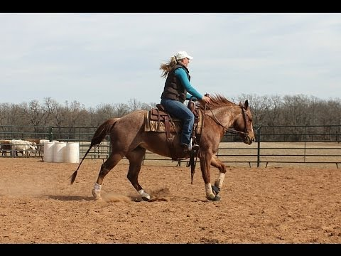 *Sold* Talk That Cash - 2010 Red Roan AQHA Mare For Sale