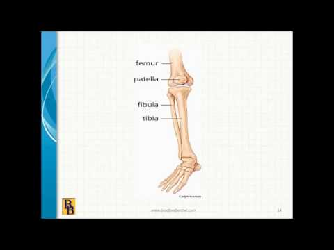 Bradford & Barthel - AMA Guides, 5th Edition, Chapter 17: The Lower Extremities