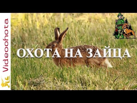Охота на зайца!АВТОРСКАЯ стратегия - Videoohota