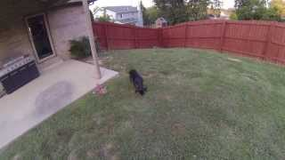Obedience Training With My Rottweiler Puppy
