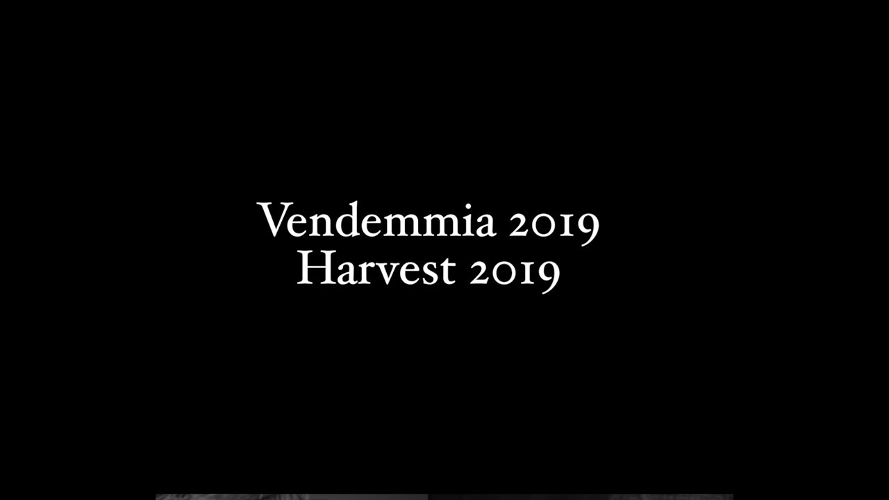 Astoria Harvest 2019