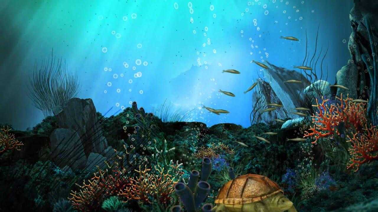 Fish 3d Wallpaper Hd Живые обои для Windows 7 аквариум Youtube