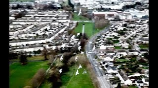 Highlight clip: Birds are getting crazy while drone flying in Dublin