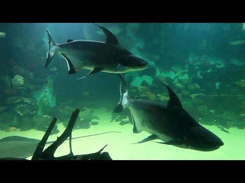 Смотреть Пензенский океанариум © Aleksey Aleshkin онлайн