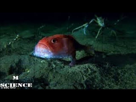 Breaking News - BBC's Blue Planet II reveals bizarre seabed shuffler