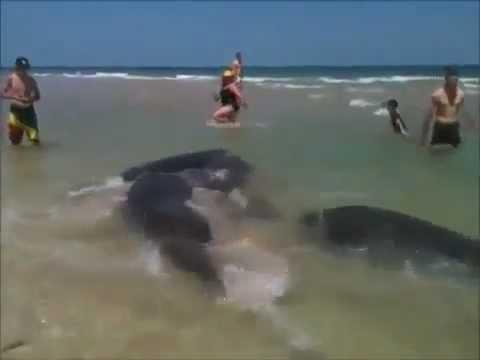 реальное видео на море система