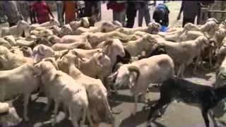 Commerce intérieur: le point des opérateurs de bétail