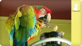 My Pet Parrot - Food