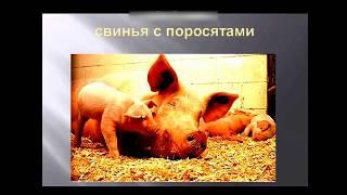 Домашние и дикие животные. Развивающее видео для детей от года.