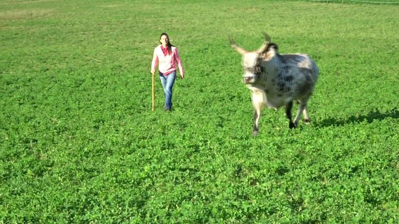 Holy' Day Ranch, c'est aussi l'histoire de tous ceux qui ont foulé un jour les terres du Ranch...