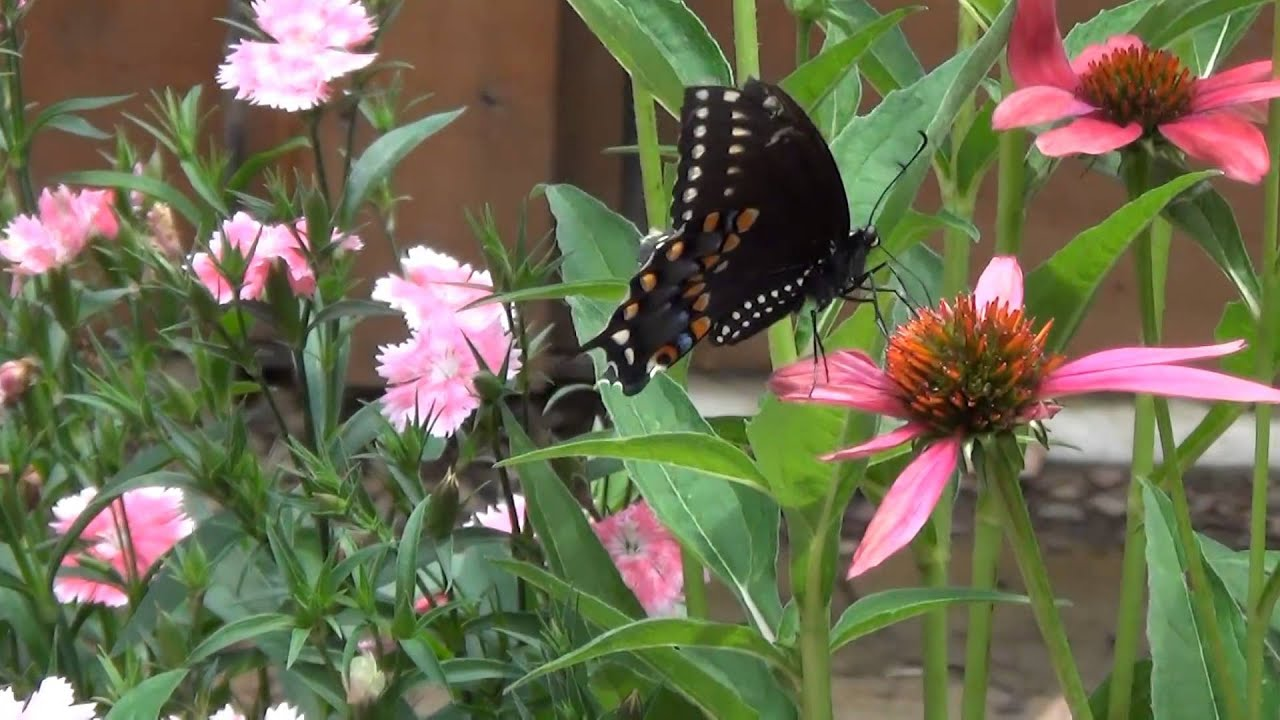 Butterfly House At The Botanical Garden Of The Ozarks Youtube
