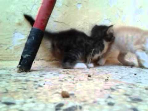 I Miei Piccoli Gattini Di Un Mese E Mezzo Youtube