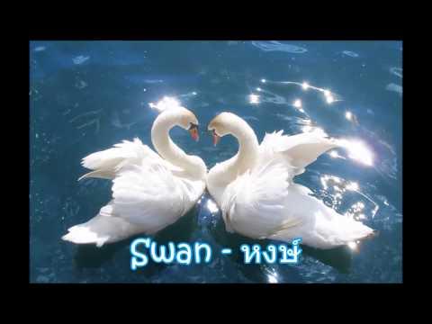Animal sound Part 1 สัตว์ปีก