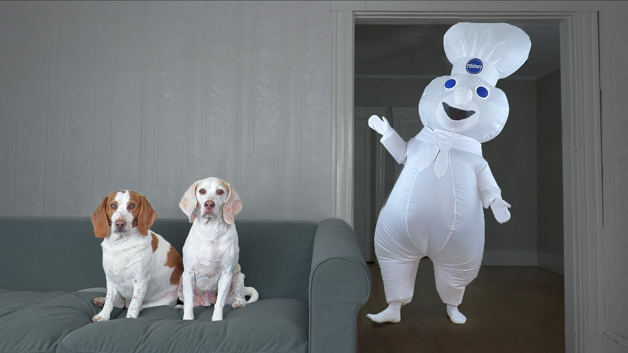 Dogs Surprised by Dancing Doughboy Prank! Funny Dogs Maymo & Potpie vs Giant Cupcake & Donut