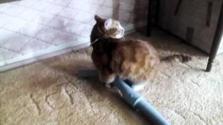 Кошка.борьба с пылесосом