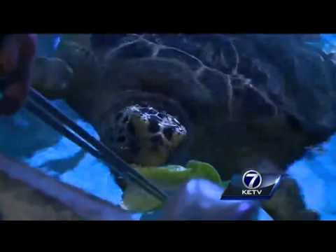 Training sea creatures at Omaha's Henry Doorly Zoo & Aquarium