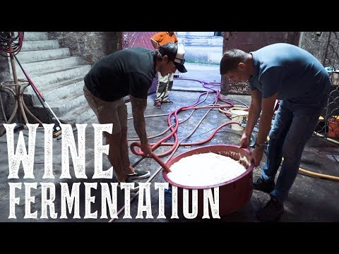 Fermenting Wine In Croatia