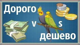 Животные: ДОРОГО vs ДЕШЕВО. Содержание попугая. Пернатик's life.
