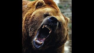 grizzly-attack-it-finally-happened
