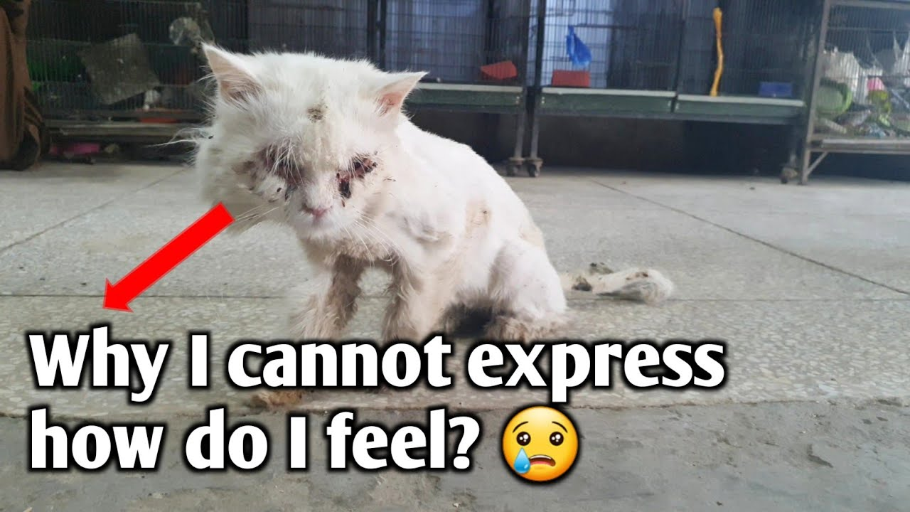 Fluffy cat waiting for a miracle to live a happy life   Rescue a cat who has lost his hope to live.