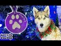 DIY Paw Print Christmas Ornaments   Make Your own Dog Ornaments