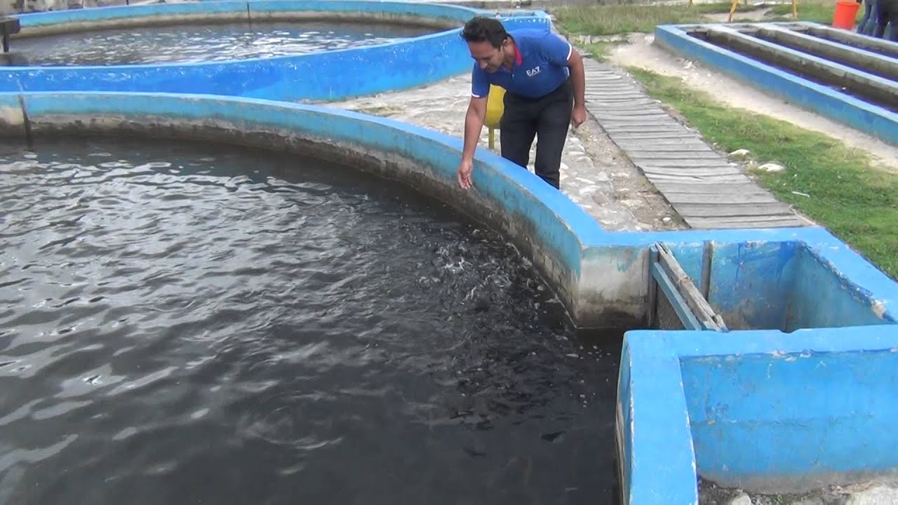 Piscicultura de truchas huaraz youtube for Construccion de estanques para tilapia