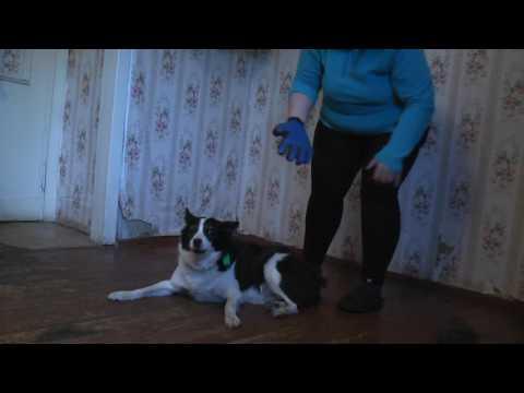 Перчатка - чесалка для собак ( кошек )