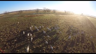 Agriculture Drone Reel