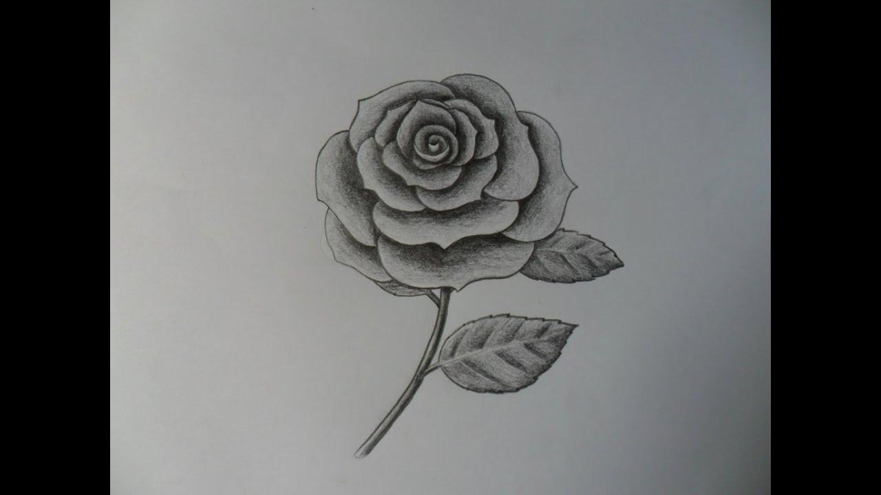 Como dibujar una Rosa, improvisándola. - YouTube