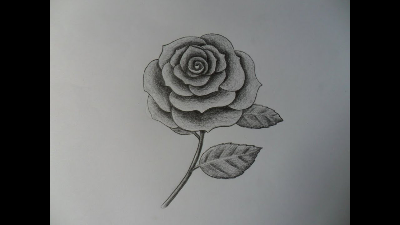 Como dibujar una Rosa improvisndola  YouTube