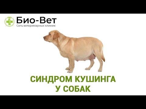 Болезнь Иценко-Кушинга. Эндокринология
