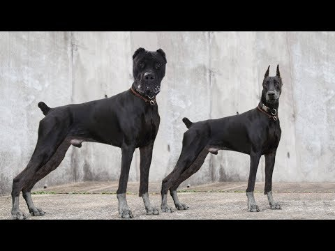 These Are 10 Most Unknown German Dog Breeds