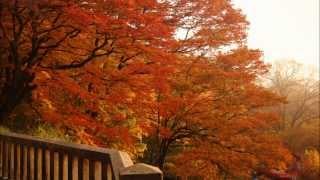 紅葉を追いかけて軽井沢へ。 早朝の旧碓氷峠、塩沢湖タリアセン、星野リ...