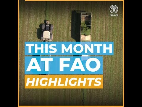 This month at FAO - December 2019