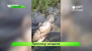 Короткой строкой  76 человек пострадали от бешеных животных  Новости Кирова 22 07 2019