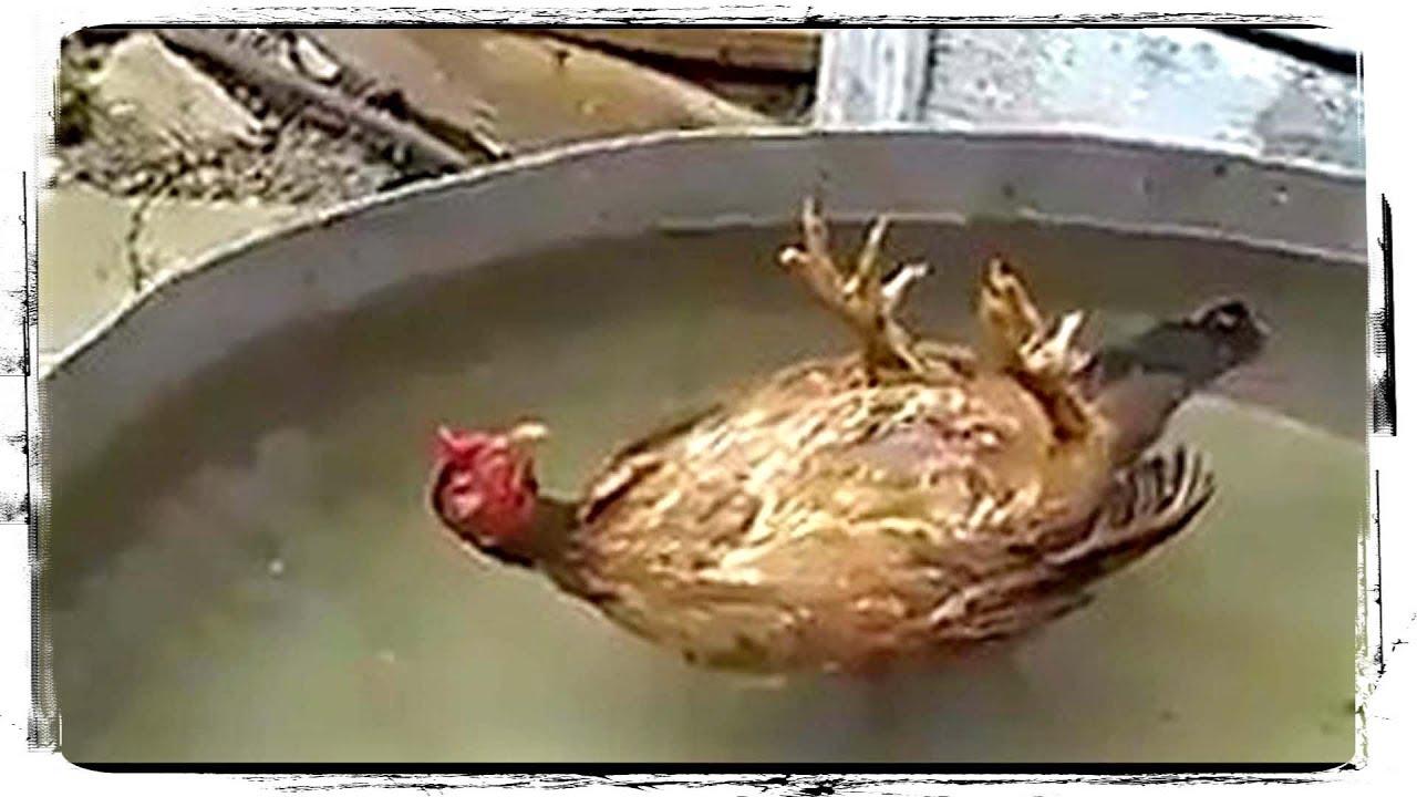 СМЕШНЫЕ ПТИЦЫ (приколы с животными) | FUNNY BIRDS (fun with animals) #553